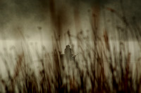 Around the Pacific Northwest