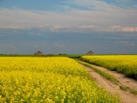 Out in the Wide Wide World