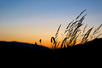 SOVO Art Exhibit